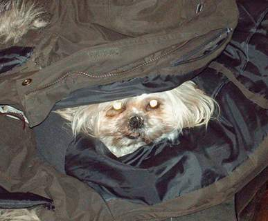 She can't go out without me - I am hiding in her coat