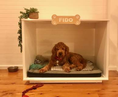 Fido again, better photo