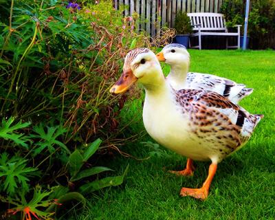 Scoop and Lady GaGa enjoying the garden