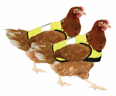 Yellow High-Vis Chicken Jacket Twin Pack