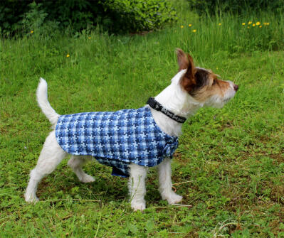 Perdie & Boo Blue Tweed Dog Jacket - Medium