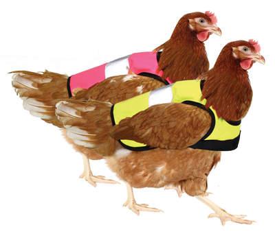 Gilet de signalisation pour poules - Lot de 2 - Rose et jaune