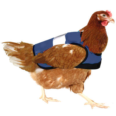 Blue High-Vis Chicken Jacket