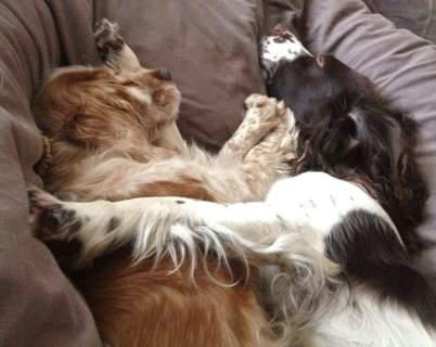 Sally & Fudge (left)