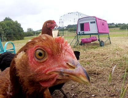 Les poulettes sont ravies de vous présenter leur new home !