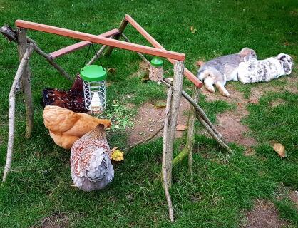 Kippen en konijnen