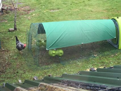 Spring hens!