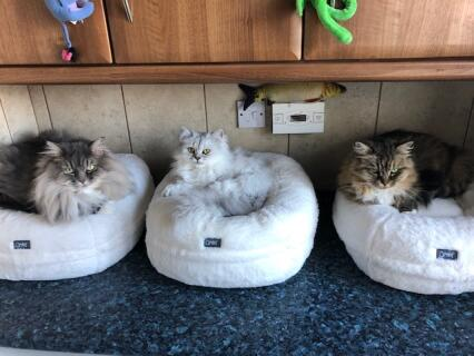3 wise cats
