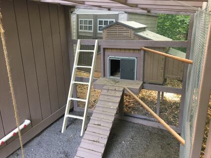 Auto Door on a Snap Lock Coop!