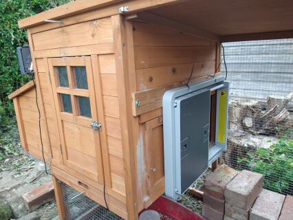 Door attached to a small wooden coop