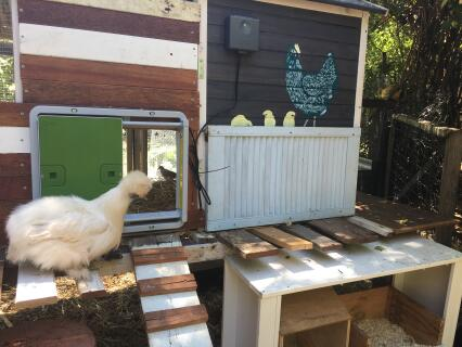 Omlet auto door on our chicken coop