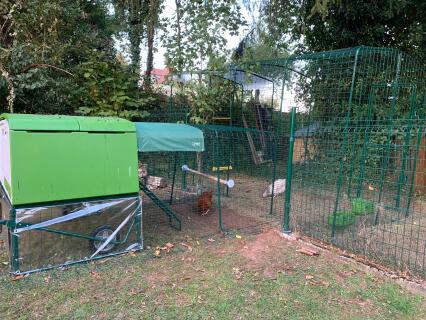 Protégées des intempéries mes poulettes