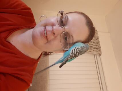 My budgie Billy bob feeling contented on my glasses! ????