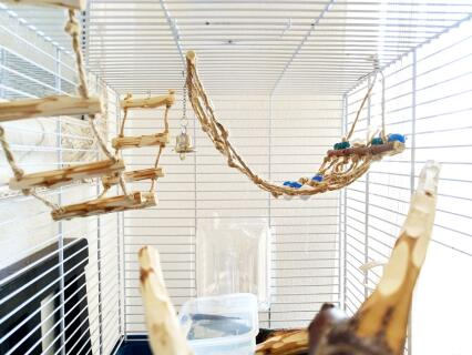 Budgie cage arrange