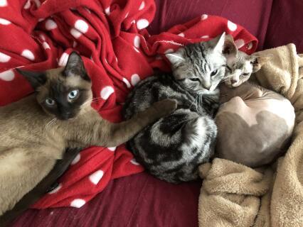 Meep, Alfie and Claude