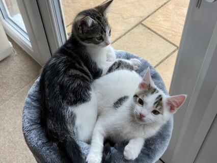 Cleo and Mia