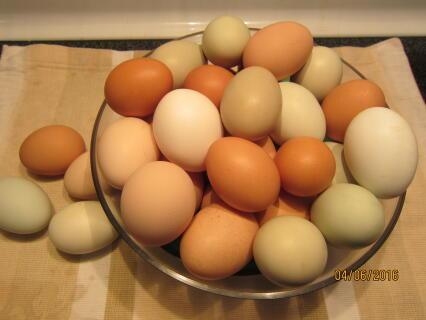 Omelet anyone?