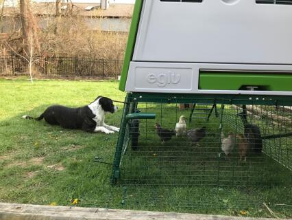 Both the dogs and the chicks love it!