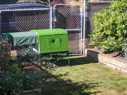 Our new coop