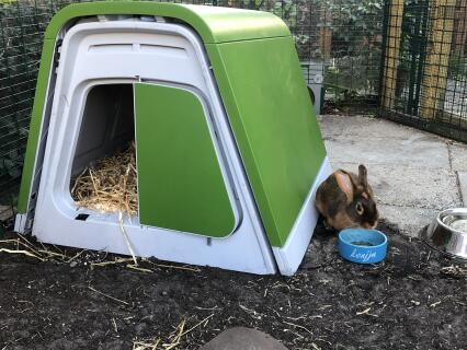 The rabbit is happy with the eglu hutch from omlet