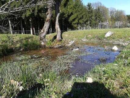 Laufenten im Teich