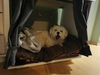 wir haben am Anfang noch seine alte Matratze reingelegt und er hat sich schnell an die Hundehütte gewöhnt. Später haben wir dann die neue Matratze reingelegt.
