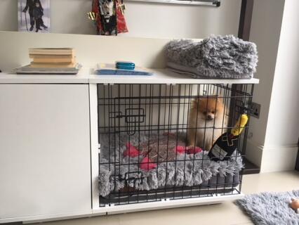 Teddy in his Fido Studio