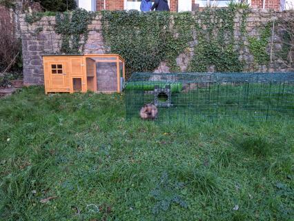 Fudge enjoys being back outside