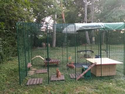 Aménagement - 4 lapins (deux nains et deux Fauves de bourgogne)
