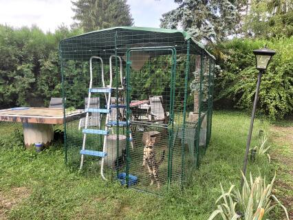 Grand enclos pour chats