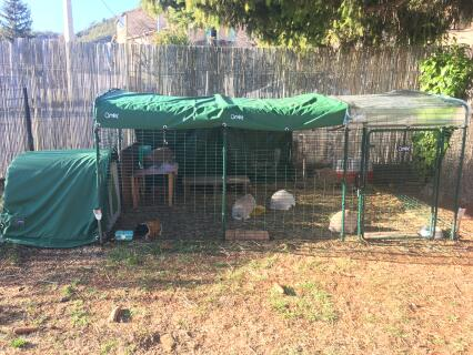 Ma famille bélier(5 lapin) et mon cochon d'inde