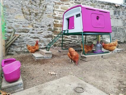 4 poules heureuses