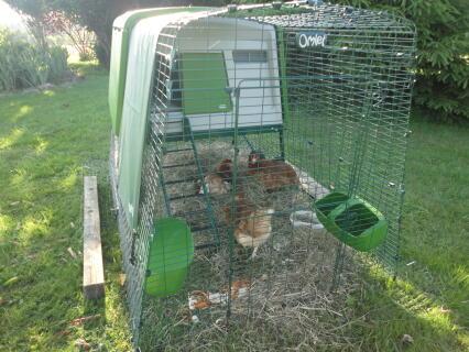 Les poulettes sont conquises