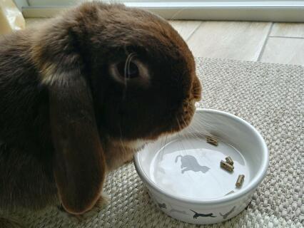 Arthur est addict à sa dose de Verm x ! Il en reçoit une petite cuillerée chaque midi et si je tarde un peu, me la réclame !