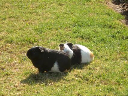 Grass time
