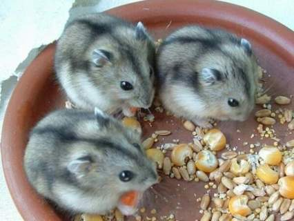 MY HAMSTERS!!!