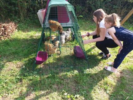 Happy Chickens =Happy Granddaughters