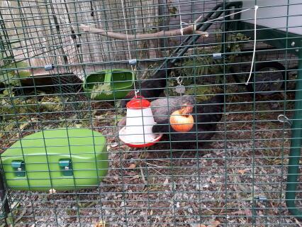 """Hönsen trivs i sin EgleCube,dock fanns ingen """"chickenswing"""" att beställa....så jag gjorde en egen!!"""