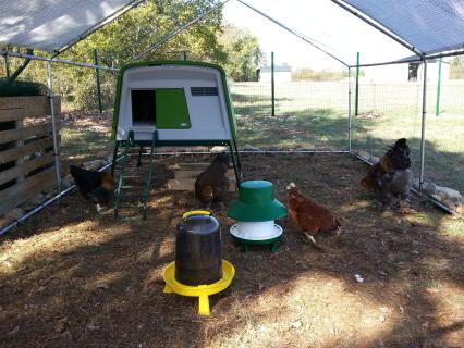 Mes poulettes et leur Mangeoire sur pieds pour volailles Blenheim, protégée de la pluie, 6kg.