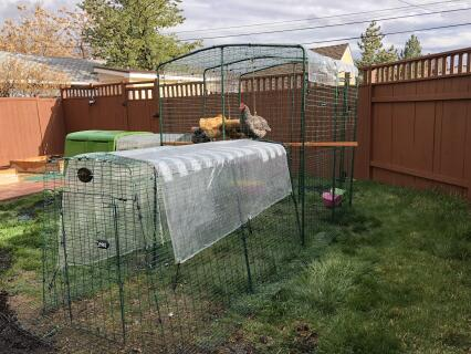 New expanded coop!
