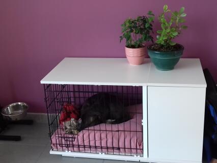 Nala se repose dans sa niche