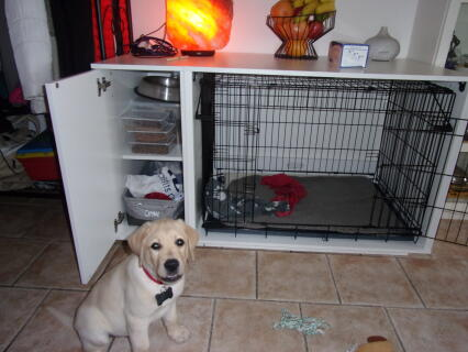 Niche Fido Nook 36 pour un chiot Labrador de 2 mois