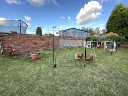 12m chicken netting with wall connection kit