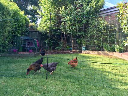 My girls are happy and secure thanks to this Omlet Fencing