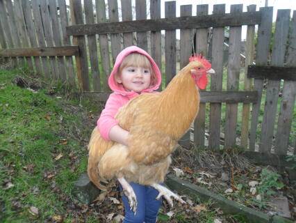 Eve and her buff orpington cockerel