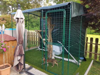 Gehege mit Naturkratzbaum und Plane