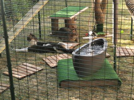Gismo und Obelix beim Mäuse beobachten