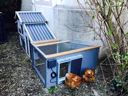 Agrandissement de poulailler fait maison avec porte automatique Omlet !