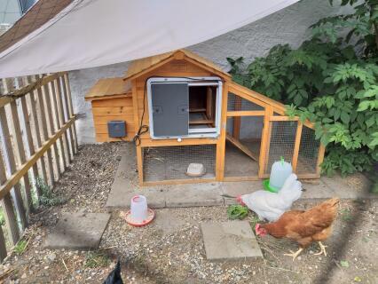 Automatic Chicken Coop Door Opener Omlet