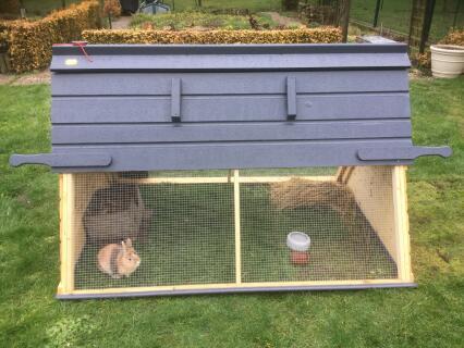 Le lapin nain apprécie également le poulailler avant l'arrivée des poulettes au printemps.